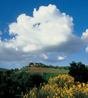 The view of Chianti Hills