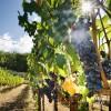 Approvato il Testo Unico del Vino da parte della Camera dei Deputati