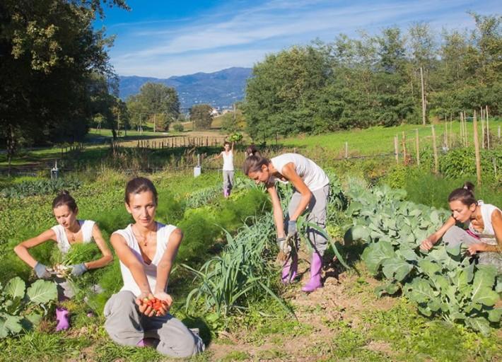 Regione Toscana: aiuti all'avviamento di imprese per giovani agricoltori