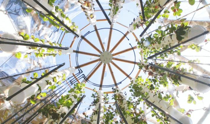 In Toscana le fragole crescono su un mini-grattacielo grazie all'idea di un giovane ingegnere della Valdichiana.