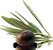 oliva-olio