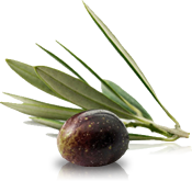 oliva-olio-en