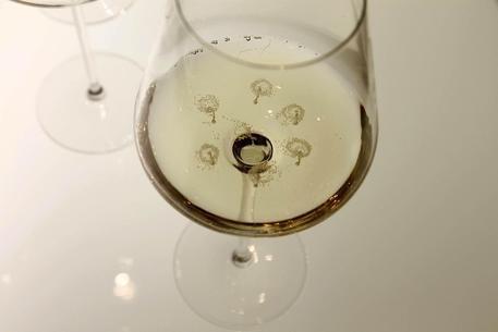 Falso vino fatto coi piselli, sequestrate 20mila bottiglie