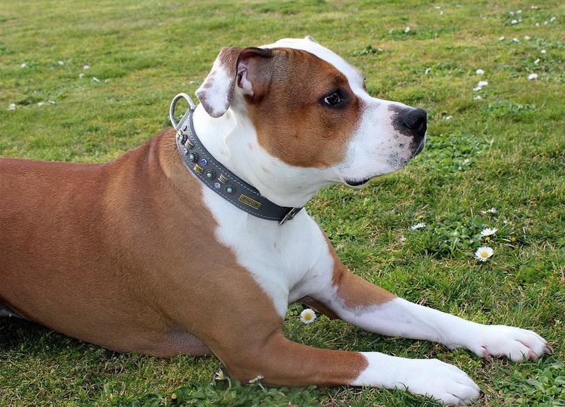 Malucchi produzione articoli per cinofilia collari in for Articoli per cani